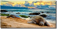 Pau Hana by Mark Middleton featuring west maui honus at sunset